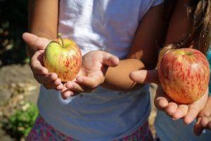 Fiesta a domicilio de cumpleaños infantiles con la granja móvil